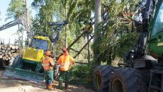 Ratowali 300-letnie drzewo