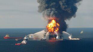 Martwe żółwie, wieloryby w ropie. Będzie film o największej katastrofie ekologicznej